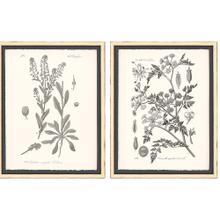 Grey Botanicals II S/2