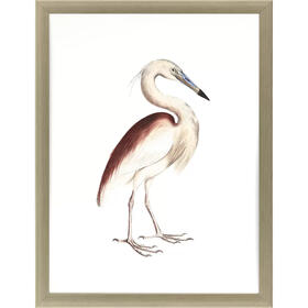 Marone Backed Heron