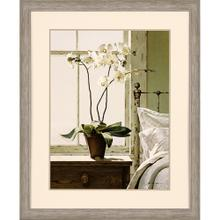 Bedside Orchid