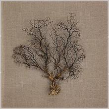 Product Image - Sea Tree
