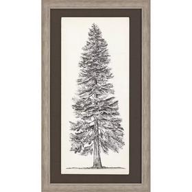 Tree Sketch I