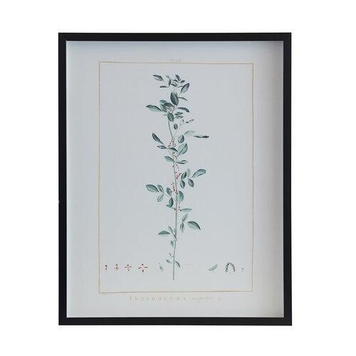 Botanical 243G