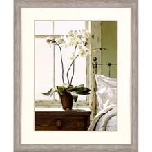 See Details - Bedside Orchid