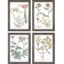 Botanical Varieties S/4