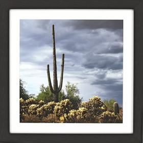 Saguaro Centurion