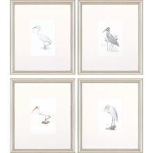 Product Image - Egrets S/4