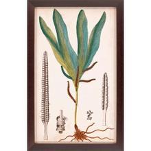 See Details - Foliage Botanique II