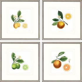 Classic Citrus S/4