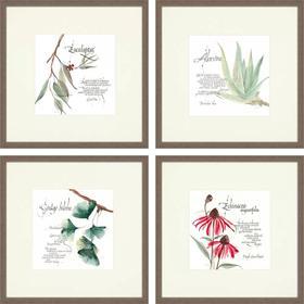 Herbal Plants S/4