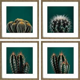 Cacti S/4