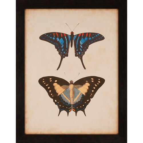 Antique Butterfly III