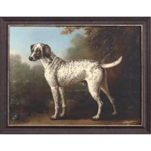 Product Image - Grey Spotted Hound