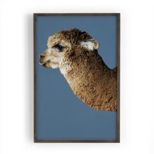 Cerulean Configuration Llama