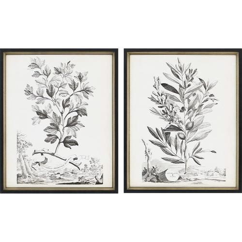 Botanicals III S/2