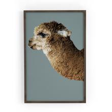 Sagebrush Configuration Llama
