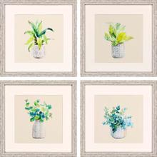 Product Image - Plants S/4