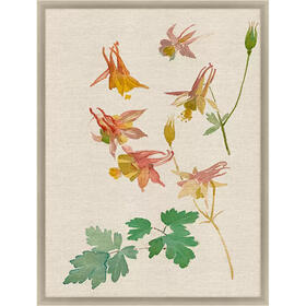 Falling Floras