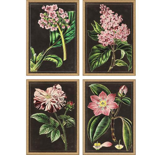 Mauve Botanicals S/4