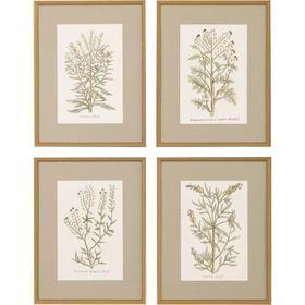 Botanical Plants S/4