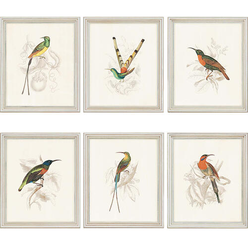 Hummingbirds S/6
