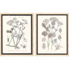 Product Image - Grey Botanicals I S/2