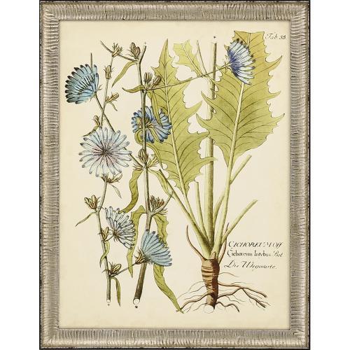 Eloquent Botanicals S/2
