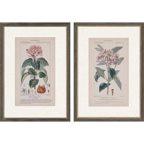 Botanique in Pink I S/2