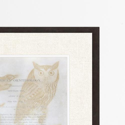 Ornithology VI