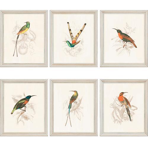 Hummingbirds S/6