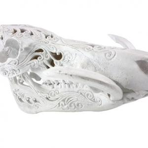 Decorative Boar Skull