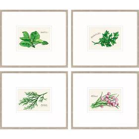 Field Guide Herbs III S/4