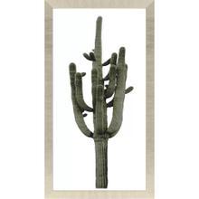 Product Image - Saguaro II