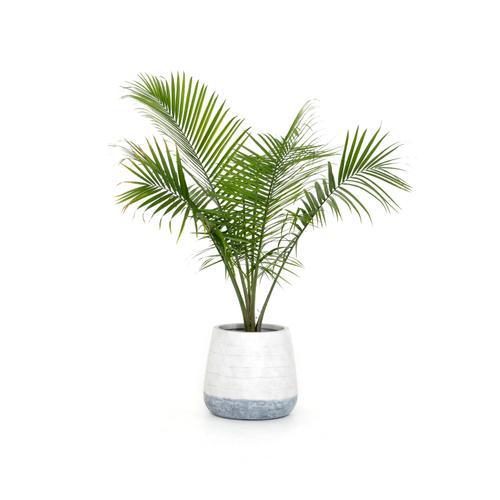 Ingall Planter