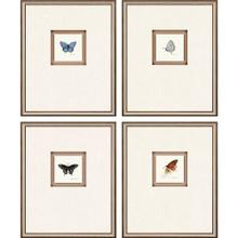 See Details - Butterfly Study I S/4