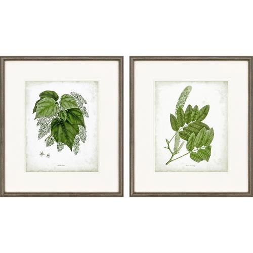 Sage Botanicals II S/2