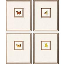 See Details - Butterfly Study II S/4