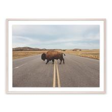 Bison Crossing By Teague Collection