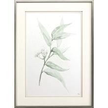 Product Image - Delicate Eucalyptus II