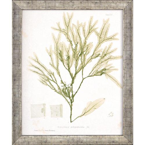 Seaweed III S/4