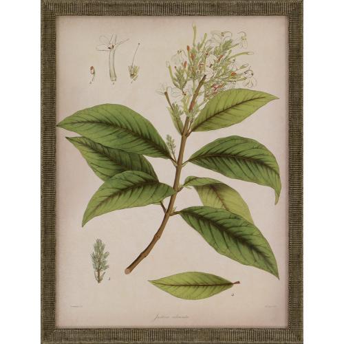 Plants II S/3