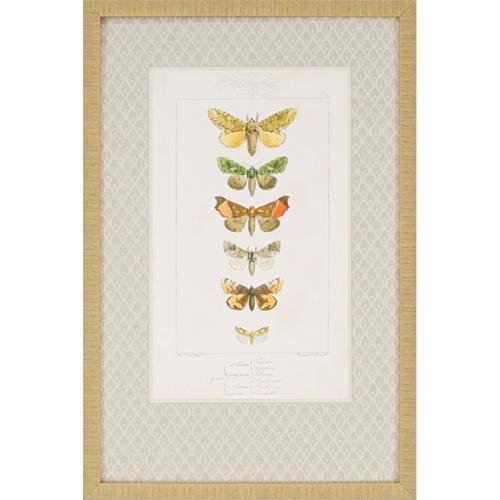 Butterflies S/2