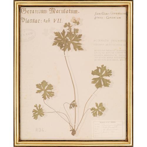 Botanicals S/4