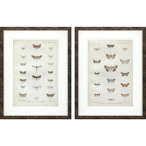 Lepidoptera S/2