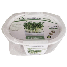 PLANTBEST Broccoli Microgreens Aqua Grow Kit