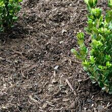 Double Processed Hardwood Mulch Brown