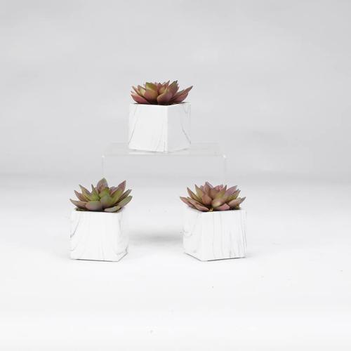 Rose Echeveria in White Marbled Ceramic Square  Set of 3