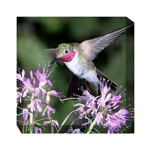 Outdoor Canvas Art - Humming Bird #1 24 x 24