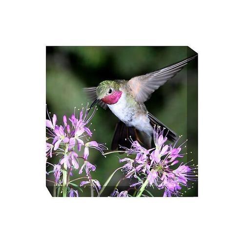 Humming Bird #1 24 x 24