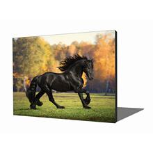 View Product - Wall Art - Black Stallion