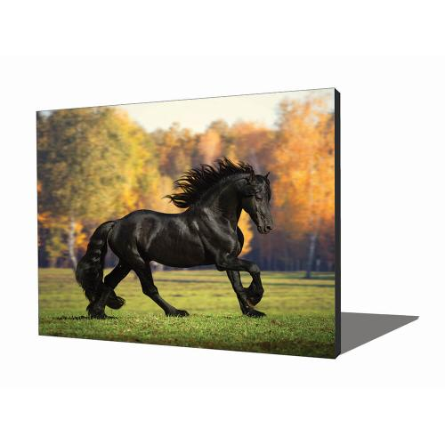 Wall Art - Black Stallion